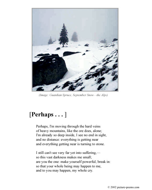 Picture/Poem Poster: Guardian Spruce