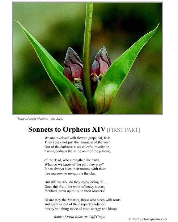 rilke sonnets to orpheus pdf
